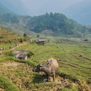 på vej mod Nam Cang - Sapa