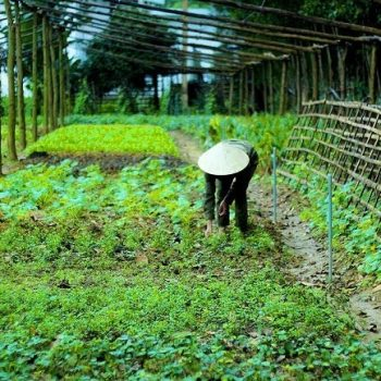 Chay Lap Farmstay - Farming (1)