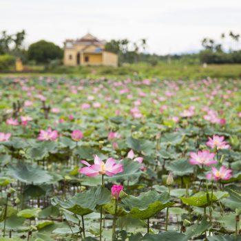 flowers-hoi an-vietnam
