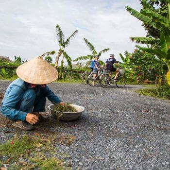 frugtplantage Mekong Delta