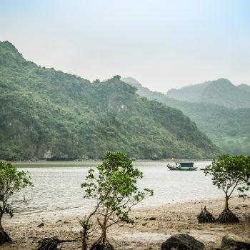 mangrove-cat ba-lan ha-vietnam
